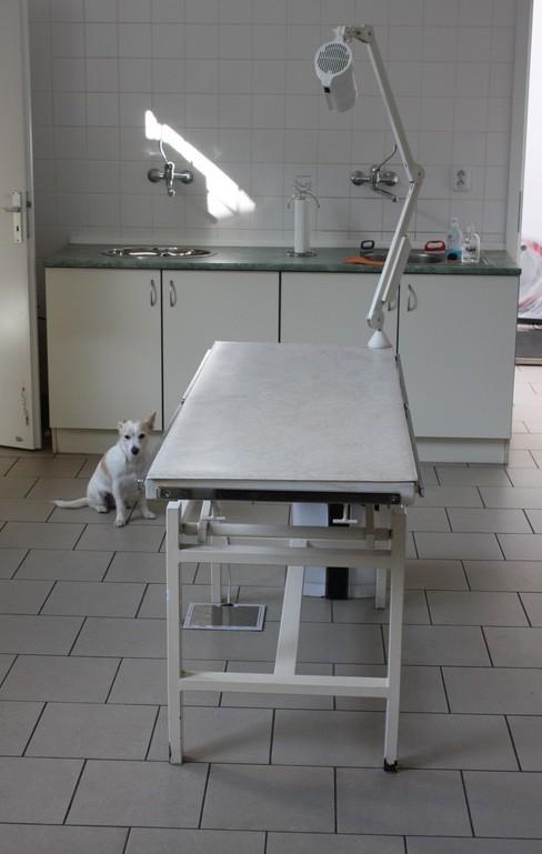 Veterinární ordinace Tuma MVDr. & Král MVDr. - fotografie 9/10