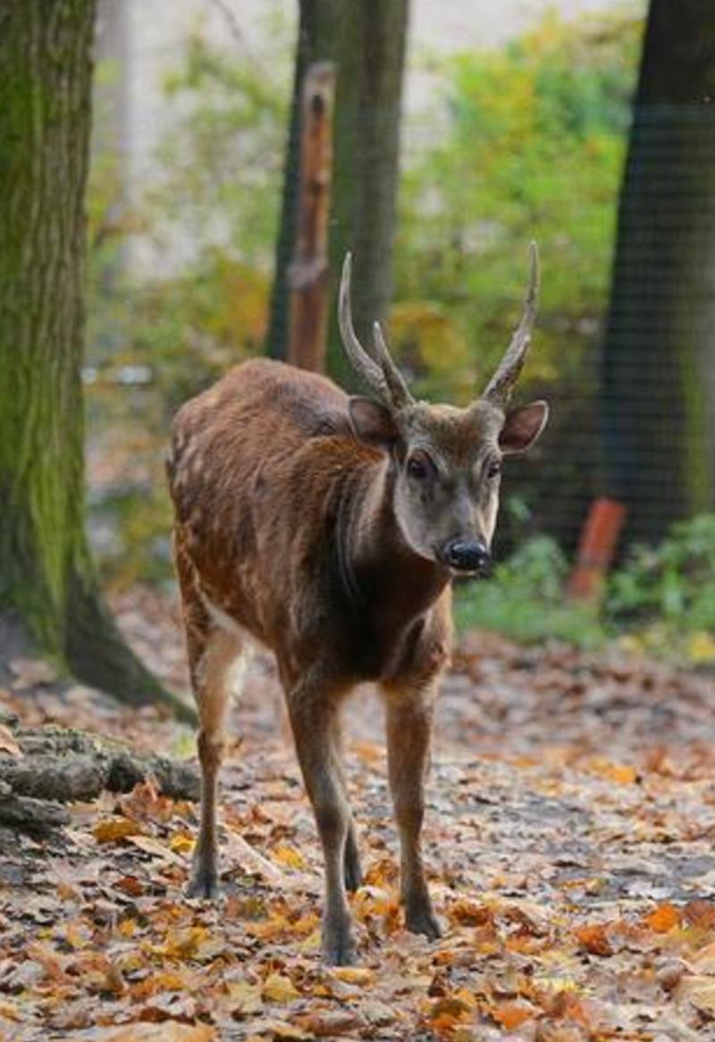 Zoologická zahrada Děčín - Pastýřská stěna, příspěvková organizace - fotografie 17/20