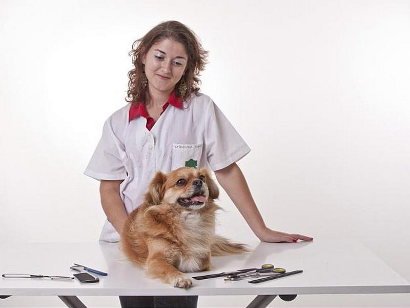 MVDr. Petr Kukuč - veterinární klinika - fotografie 1/4