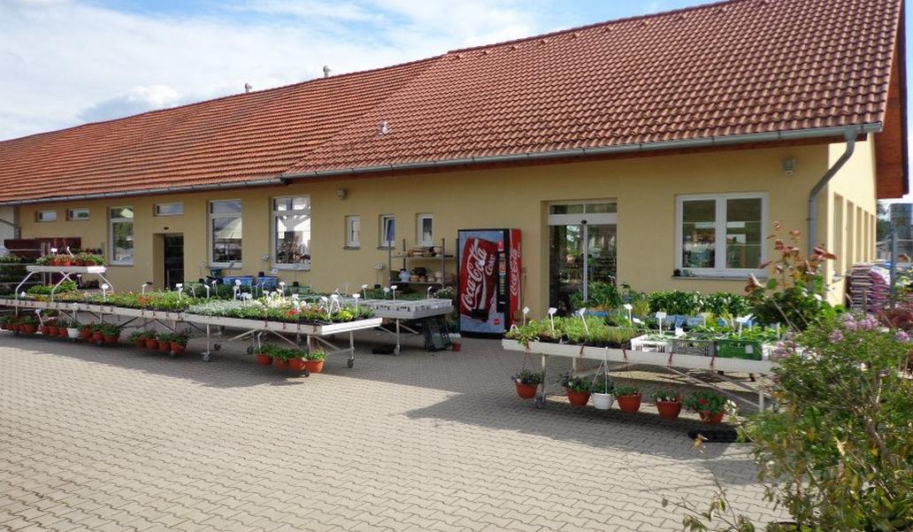 Zahradnictví Školky - Montano, spol. s r.o. - velkoochod - fotografie 2/15