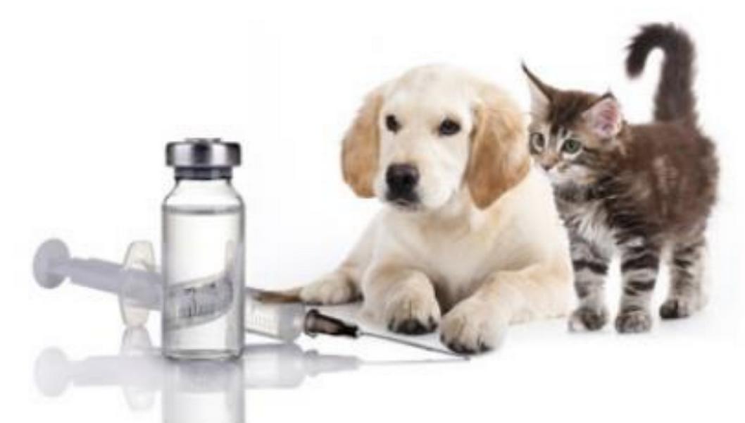 Langr Vet s.r.o. – veterinární služby - fotografie 4/6