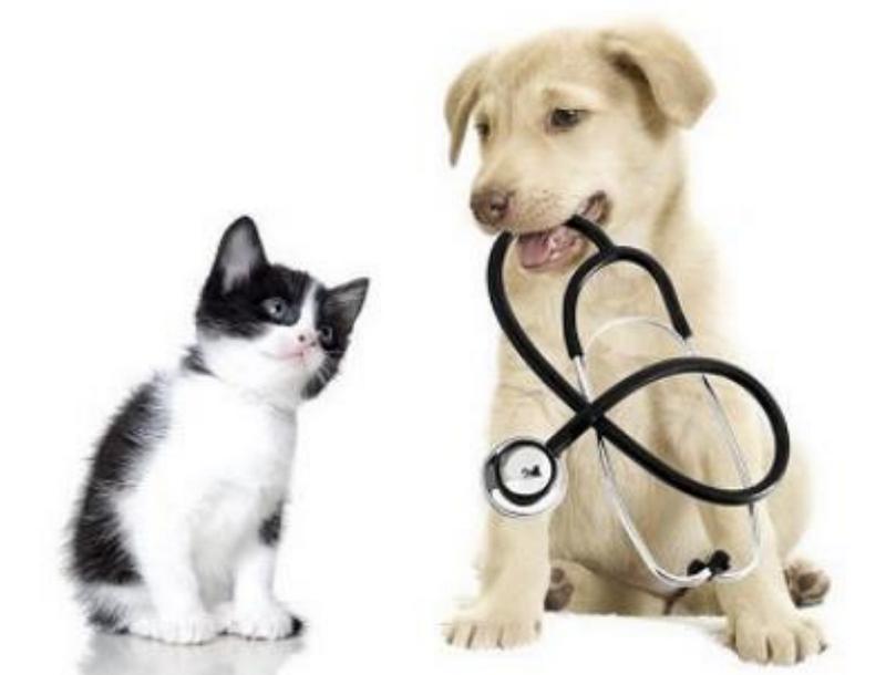 Langr Vet s.r.o. – veterinární služby - fotografie 1/6