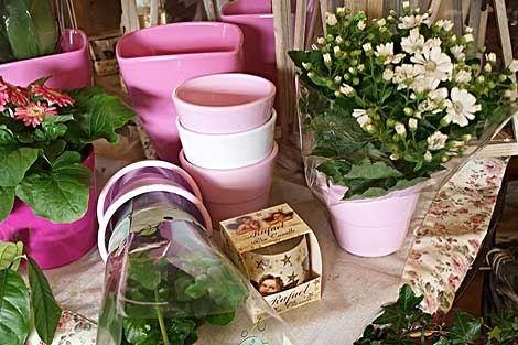 CATTLEYA - velkoobchod květin a bytové dekorace - fotografie 5/19