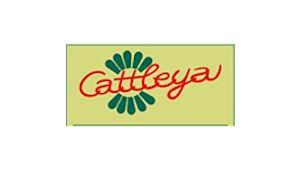 CATTLEYA - velkoobchod květin a bytové dekorace