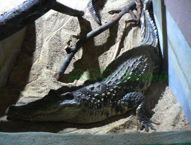 Krokodýlí zoo Protivín - fotografie 8/18