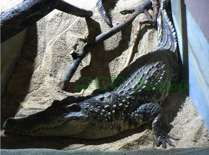 Krokodýlí zoo Protivín - fotografie 14/18