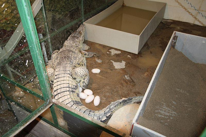 Krokodýlí zoo Protivín - fotografie 6/18