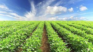 Zemědělské družstvo Velká Losenice - profilová fotografie