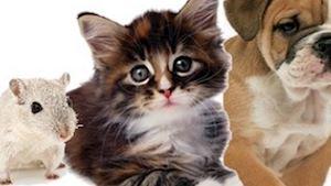 MVDr. Dalibor Boháč - veterinární klinika - profilová fotografie