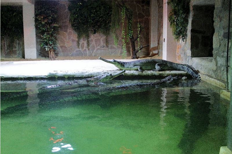 Krokodýlí zoo Protivín - fotografie 7/18