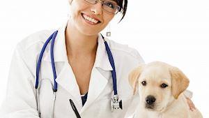 Všeobecná veterinární činnost – MVDr. Jan Vojta - profilová fotografie