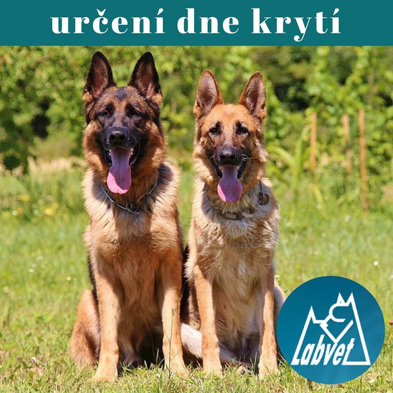 Labvet.cz, s.r.o. - veterinární klinická laboratoř - fotografie 6/6