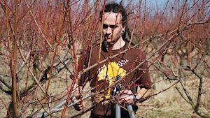 Soutěže středních zahradnických škol – konfrontace dovedností a znalostí