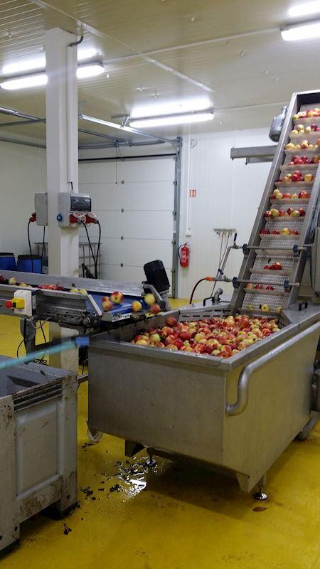 Mytí a třídění jablek