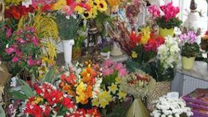 Zahradnictví Havlina - Ing. Petr Havlina - profilová fotografie