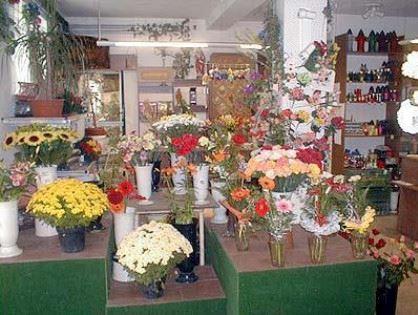 Zahradnictví Havlina - Ing. Petr Havlina - fotografie 2/5