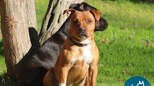 Genetické testy psů