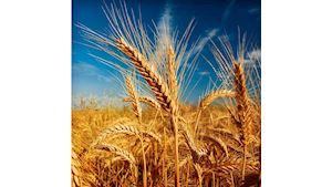 TEAM, v.o.s. - zemědělská výroba