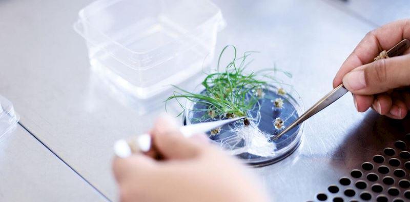 DLF Seeds, s.r.o. - fotografie 3/10