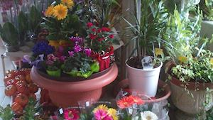 Zahradnictví - Jelínek Květoslav