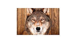 Truhlářství U Vlka - zakázková výroba
