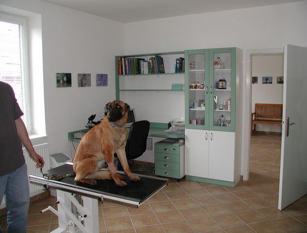 Animal - veterinární klinika - MVDr. Jiří Pikula, Ph.D. - fotografie 1/17