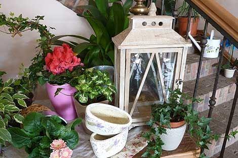 CATTLEYA - velkoobchod květin a bytové dekorace - fotografie 4/19