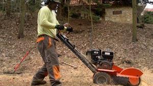 Rizikové kácení a údržba stromů - profilová fotografie