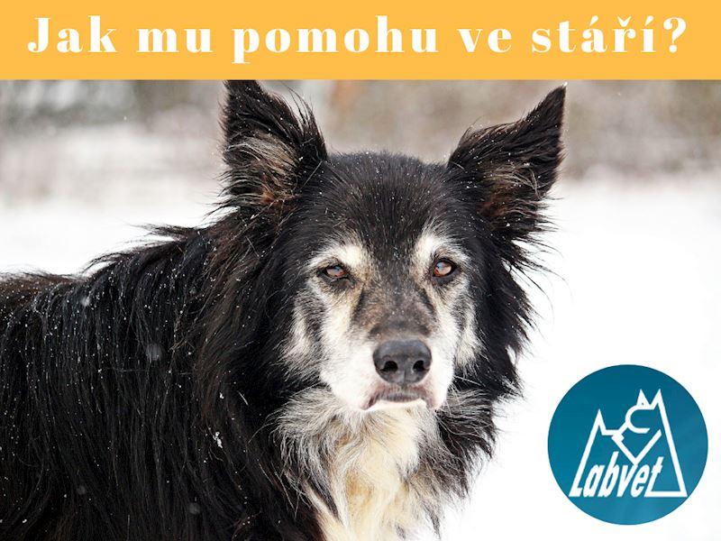 Geriatrické testy psů