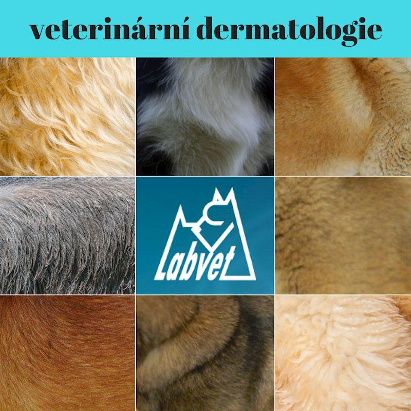 Labvet.cz, s.r.o. - veterinární klinická laboratoř - fotografie 4/6