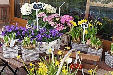 CATTLEYA - velkoobchod květin a bytové dekorace - fotografie 2/19