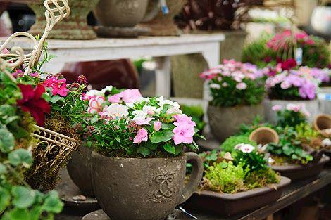 CATTLEYA - velkoobchod květin a bytové dekorace - fotografie 8/19