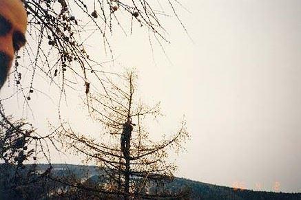 Rizikové kácení stromů - LIŠKA VLADIMÍR - fotografie 1/10