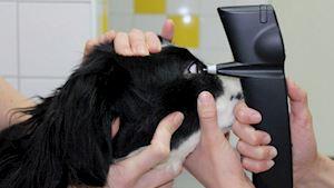 Veterinární klinika Na Weilovně - profilová fotografie