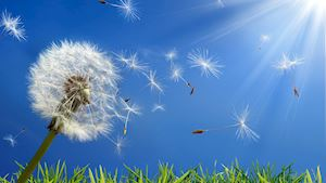 4 důvody proč je rekuperace vhodná pro alergiky
