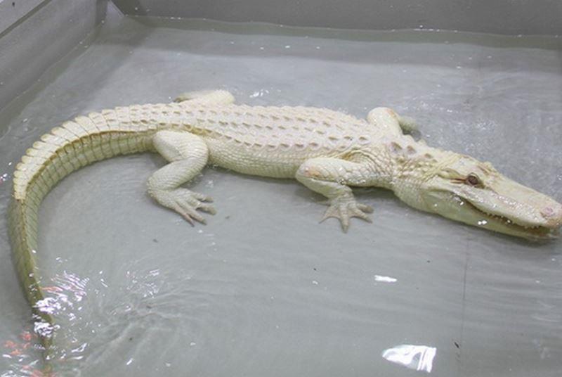 Krokodýlí zoo Protivín - fotografie 13/18
