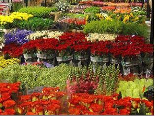 CATTLEYA - velkoobchod květin a bytové dekorace - fotografie 11/19