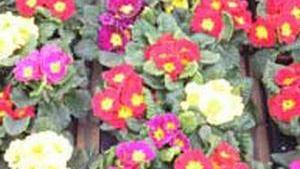 Květinářství U levandule