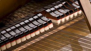 Novotný Pavel - ladění a opravy klavírů - profilová fotografie