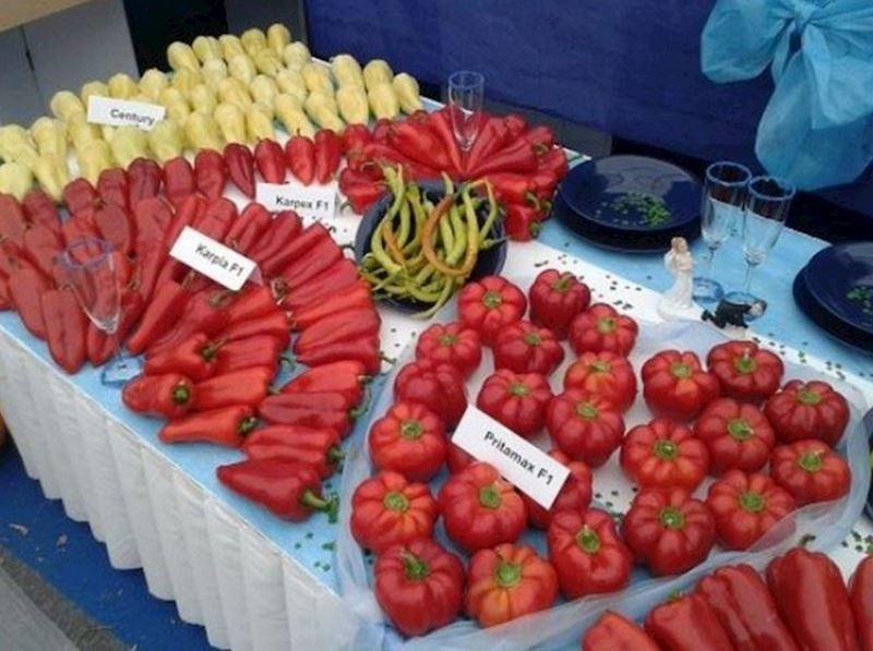 HMH, spol. s r.o. - zelenina - fotografie 1/10