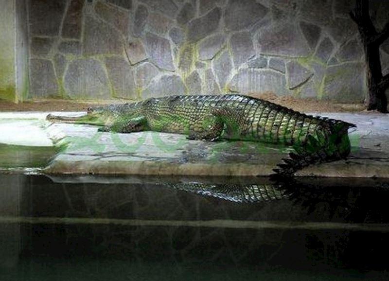 Krokodýlí zoo Protivín - fotografie 11/18