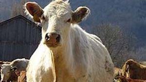 Agrome s.r.o. - zemědělská výroba