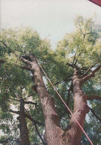 Arbosana - zahradní architektura - fotografie 12/15
