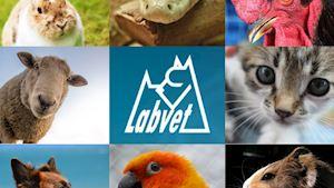 Labvet.cz, s.r.o. - veterinární klinická laboratoř - profilová fotografie