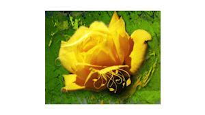 Květiny Eva Žaludková