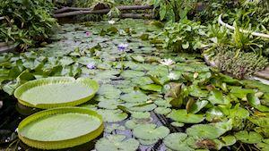 Seznamte se s rostlinami, které z našich obydlí dělají domov Americké pokojovky
