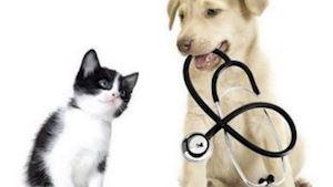 Langr Vet s.r.o. – veterinární služby