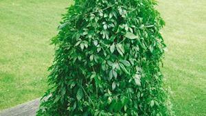 Nádobové rostliny