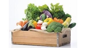 TERCIE - velkoobchod ovoce a zeleniny