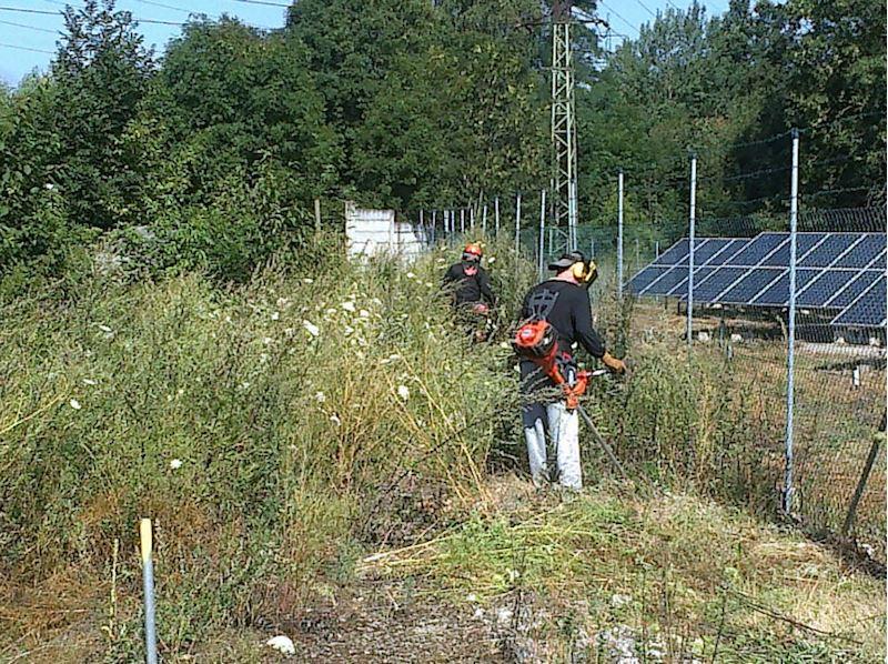 Sekání fve, údržba fve, údržba solárních elektráren - Plzeň, Domažlice, Tachov - fotografie 6/14